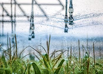 Irrigation equipment working in corn field.